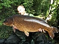 James Green, 31st Jul<br />1. PB 38lbs 13oz common